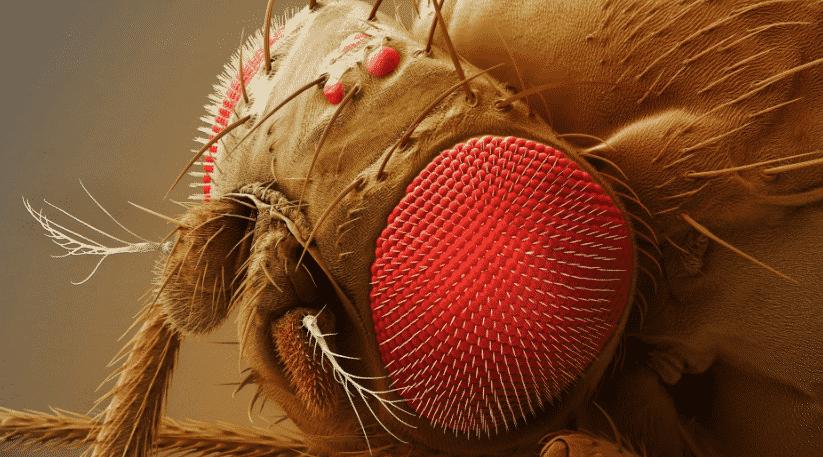 La Mosca De La Fruta : !Una Plaga Que No Puedes Ignorar!