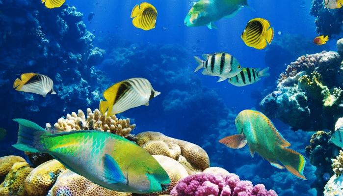 como se clasifican los peces segun sus tipos h bitat