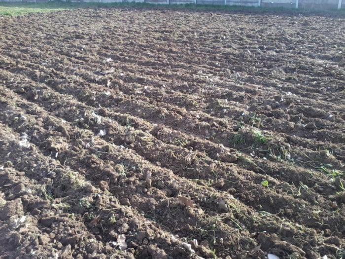 Puedes preparar la tierra en casa y gozar de cultivos optimos - Preparacion de la tierra para sembrar ...