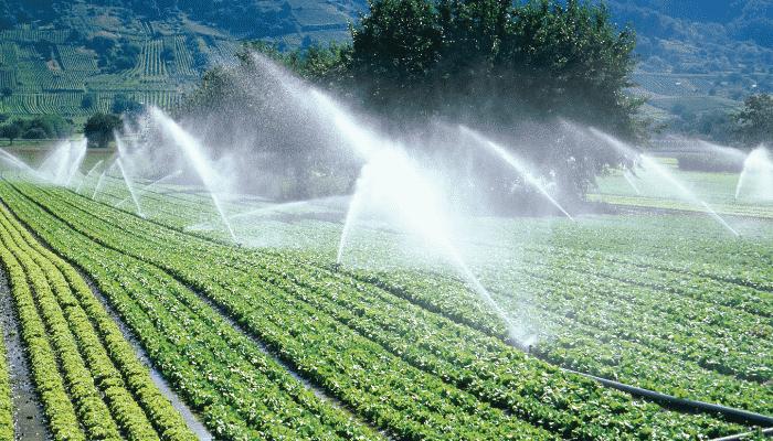 riego agricola cultivos de regadio