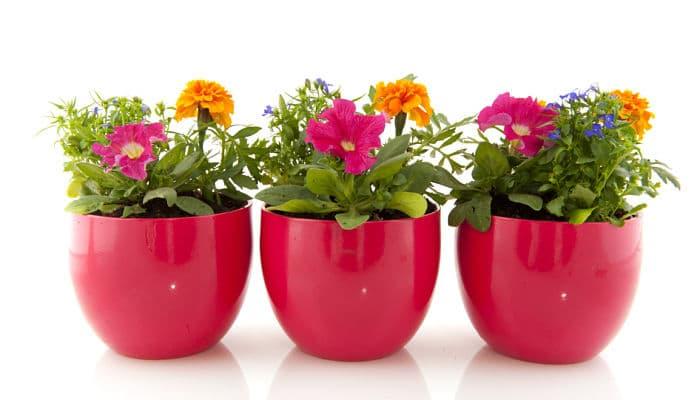 8 tipos de plantas ornamentales identifica cual es la for Viveros ornamentales
