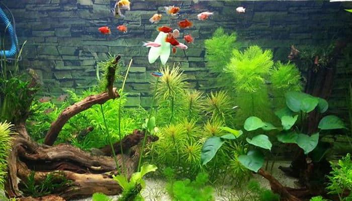 Acuarios de plantas agronomaster for Plantas de acuario