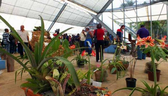 Plantas decorativas agronomaster for Plantas decorativas ornamentales