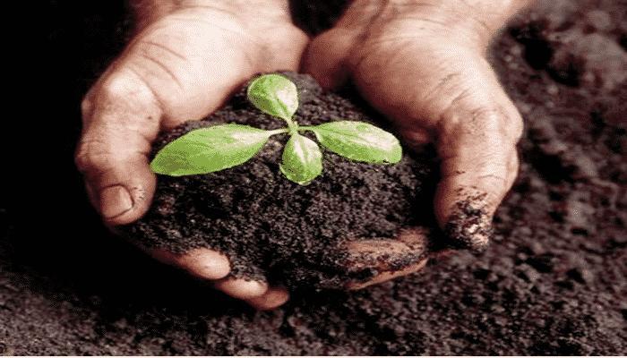 Abono org nico e inorg nico dos opciones viables para - Abono organico para plantas ...