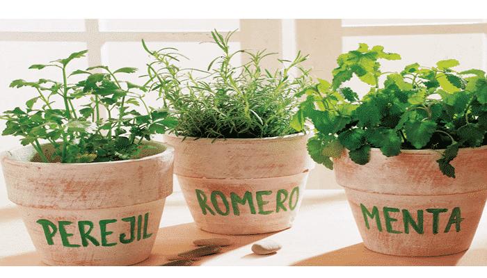 Plantas arom ticas 10 agronomaster for Tipos de plantas aromaticas