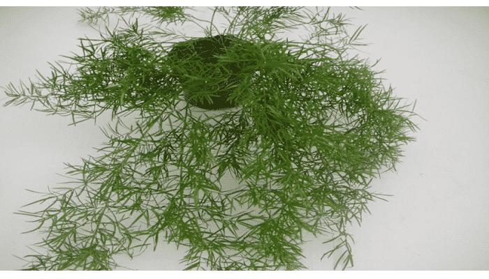 cuidados de las plantas colgantes - Plantas Colgantes