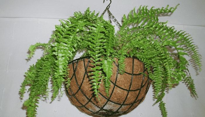 3 tipos de plantas colgantes para exteriores y 3 para