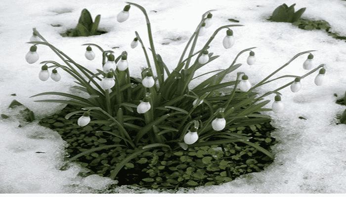 7 plantas de invierno de gran belleza que puedes tener en for Plantas de invierno exterior