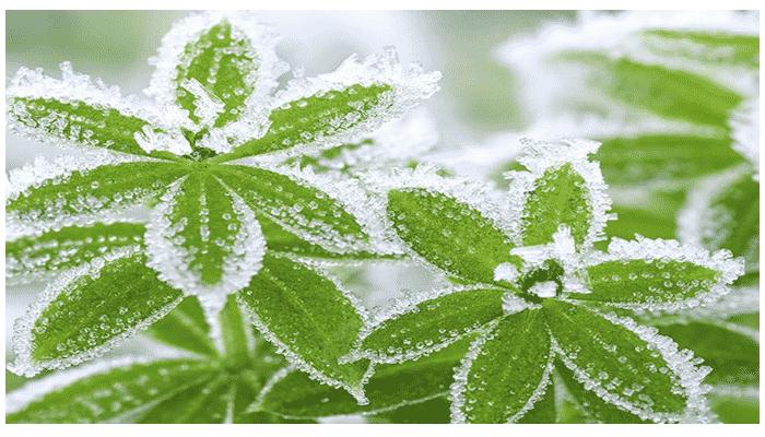 Plantas de invierno 2 agronomaster - Plantas de invierno ...