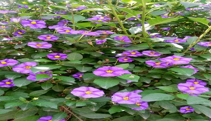 Plantas de invierno 9 agronomaster - Plantas de invierno ...