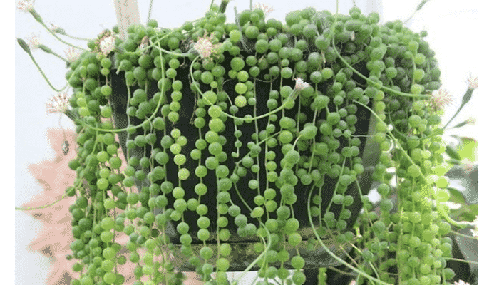 4 tipos de plantas trepadoras que podr an estar en tu jard n - Tipos de plantas de exterior ...