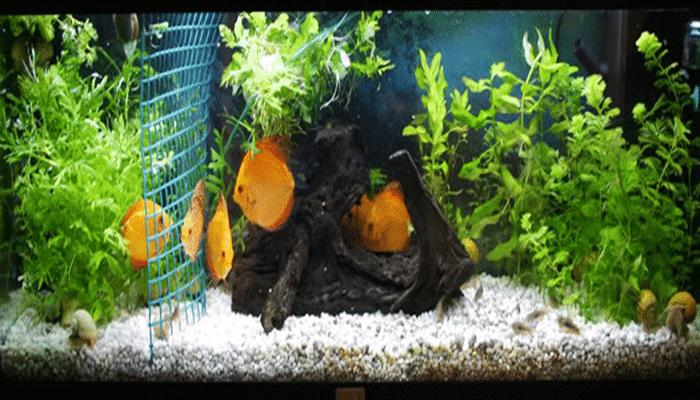 3 tips 16 cuidados esenciales para los acuarios peque os for Todo para acuarios