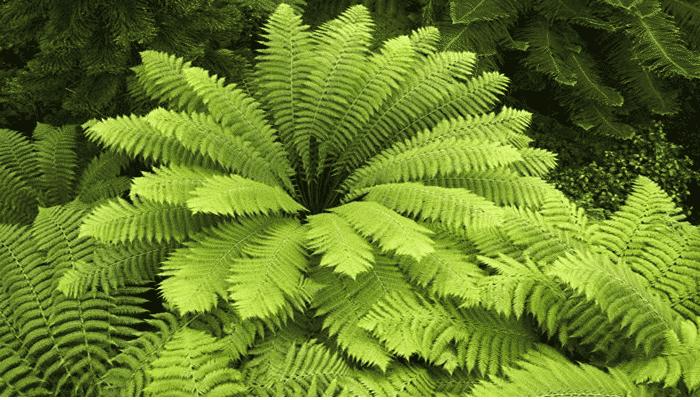 3 Tipos De Plantas De Helechos Que Debes Tener En Tu Hogar