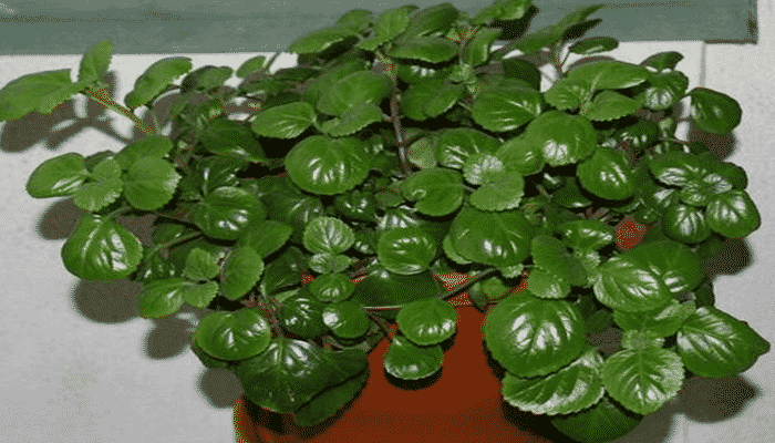 9 plantas de interior resistentes para integrar un for Plantas de interior duraderas