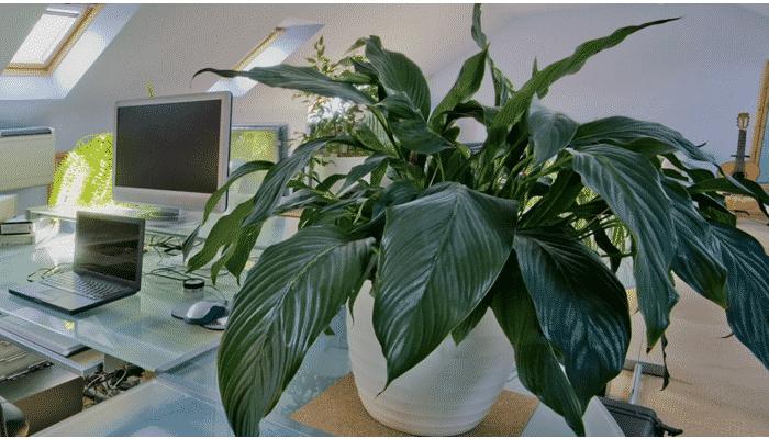 9 plantas de interior resistentes para integrar un - Plantas muy resistentes ...