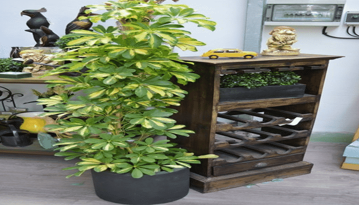 Plantas de interior resistentes 4 agronomaster - Plantas de interior resistentes ...