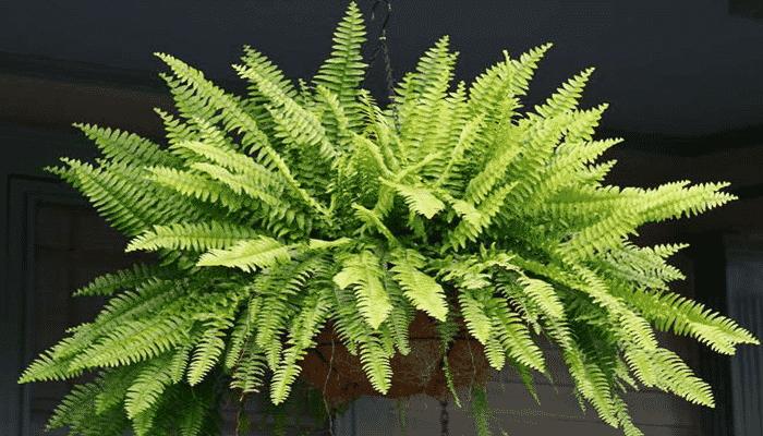 Plantas de sombra 1 agronomaster - Plantas de exterior de sombra ...