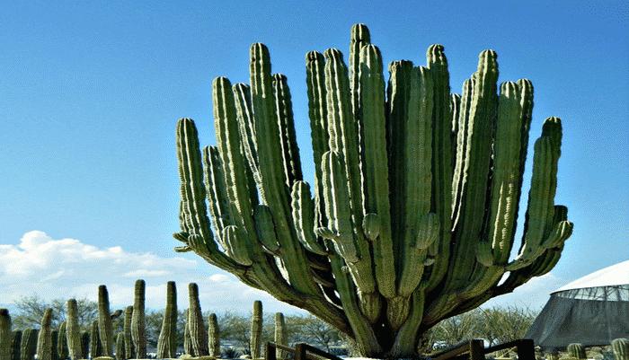 12 tipos de plantas del desierto que se pueden adaptar a for Cactus tipos y nombres