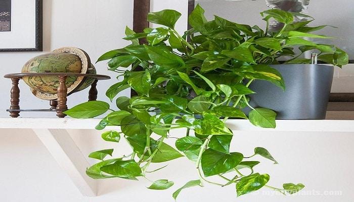 5 plantas para el ba o que puedes colocar para dar paz al - Plantas en el bano ...