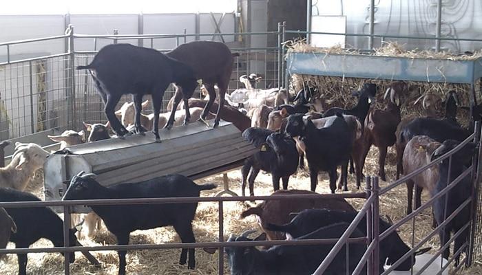 Consejería de Agricultura y Ganadería - Junta de Castilla
