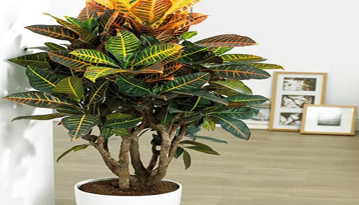 7 clases de plantas que no necesitan luz obs rvalas - Plantas de interior que no necesitan luz ...