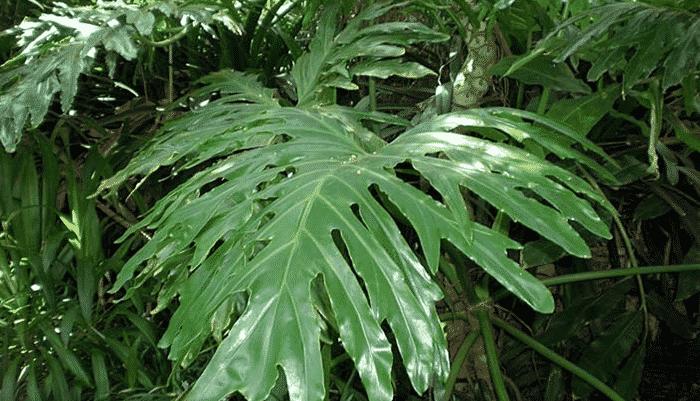 Plantas de interior que no necesitan luz cheap palmera with plantas de interior que no - Plantas de interior que no necesitan luz ...