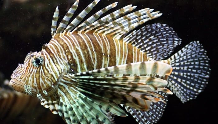 4 Partes principales de la anatomía de los peces con sus 9 tipos de ...