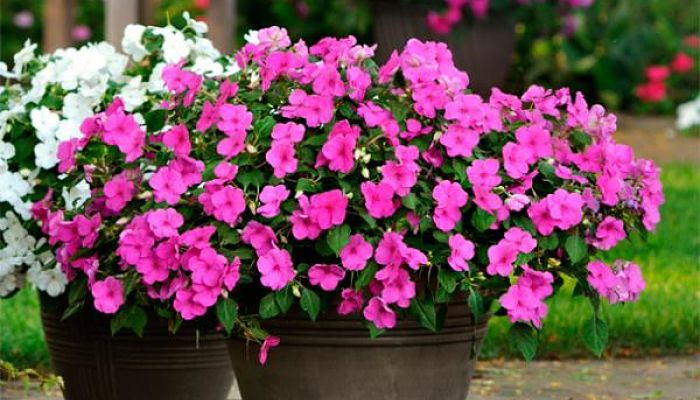 8 tipos de plantas ornamentales identifica cual es la for Plantas decorativas ornamentales