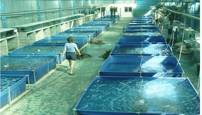 2 sistemas de producci n 7 tipos de cultivos de for Tipos de estanques para acuicultura