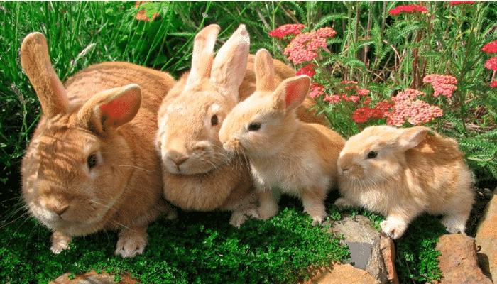 6 beneficios 4 m todos de crianza en jaulas para la cr a de conejos - Donde comprar arroz salvaje ...