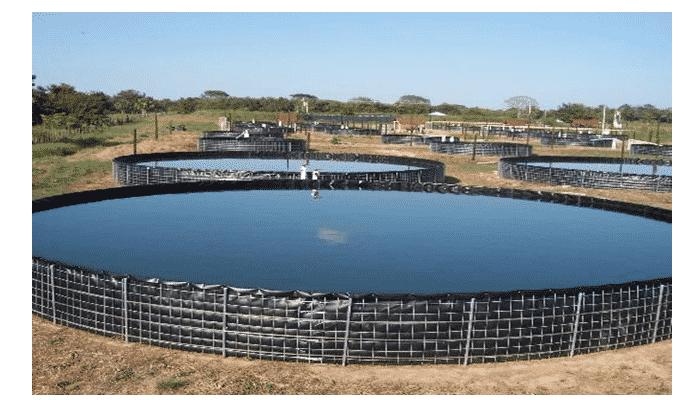 3 4 tipos y etapas importantes dentro de la piscicultura for Estanques de mojarra tilapia