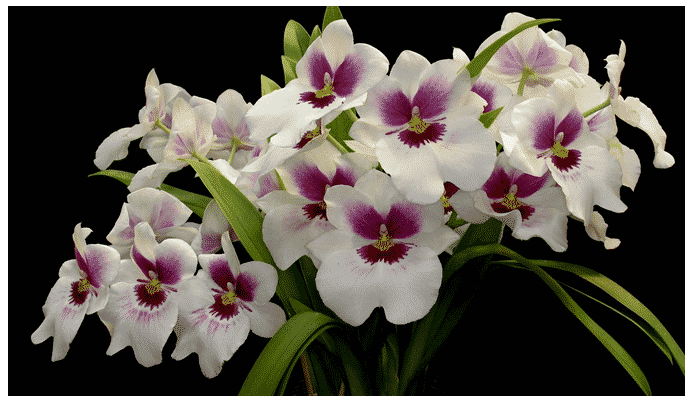 3 Plantas Con Flores Exoticas Que Se Pueden Cruzar En Tu Camino
