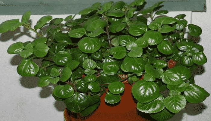 9 Plantas De Interior Resistentes Para Integrar Un Ambiente Natural - Plantas-de-interior-resistentes