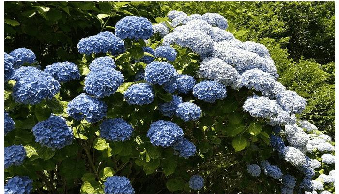 4 Tipos De Plantas De Sombra Que Adoraras Descubrelas - Flores-de-sombra