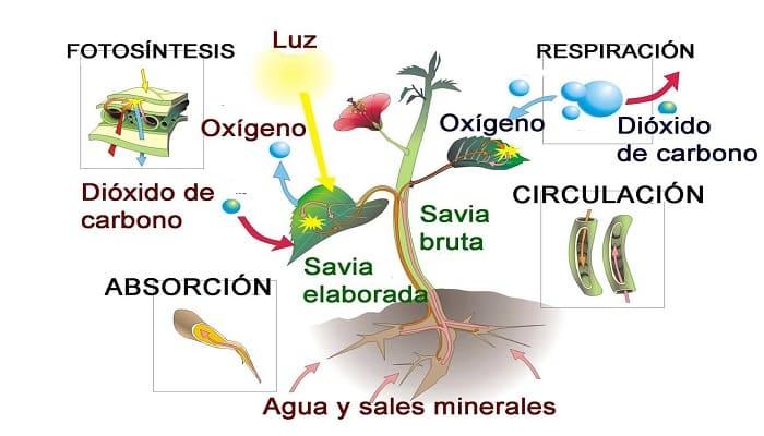 Respiracion De Las Plantas Gif: La Respiración Y Transpiración En Los Vegetales Y La