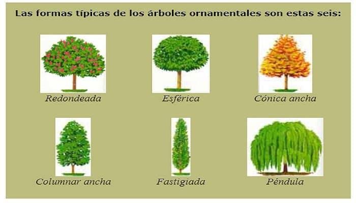 3 tipos de poda para mejorar la forma y desarrollo de tus for Cuales son los tipos de arboles