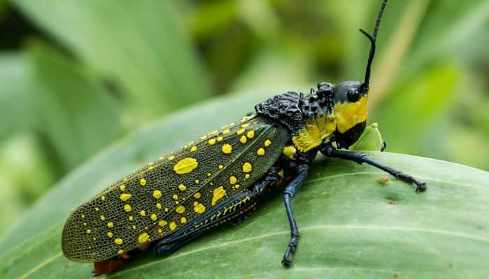 Orden Homoptera